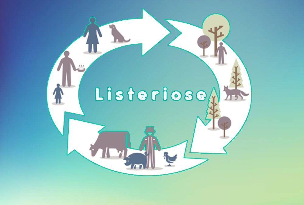 Listeriose